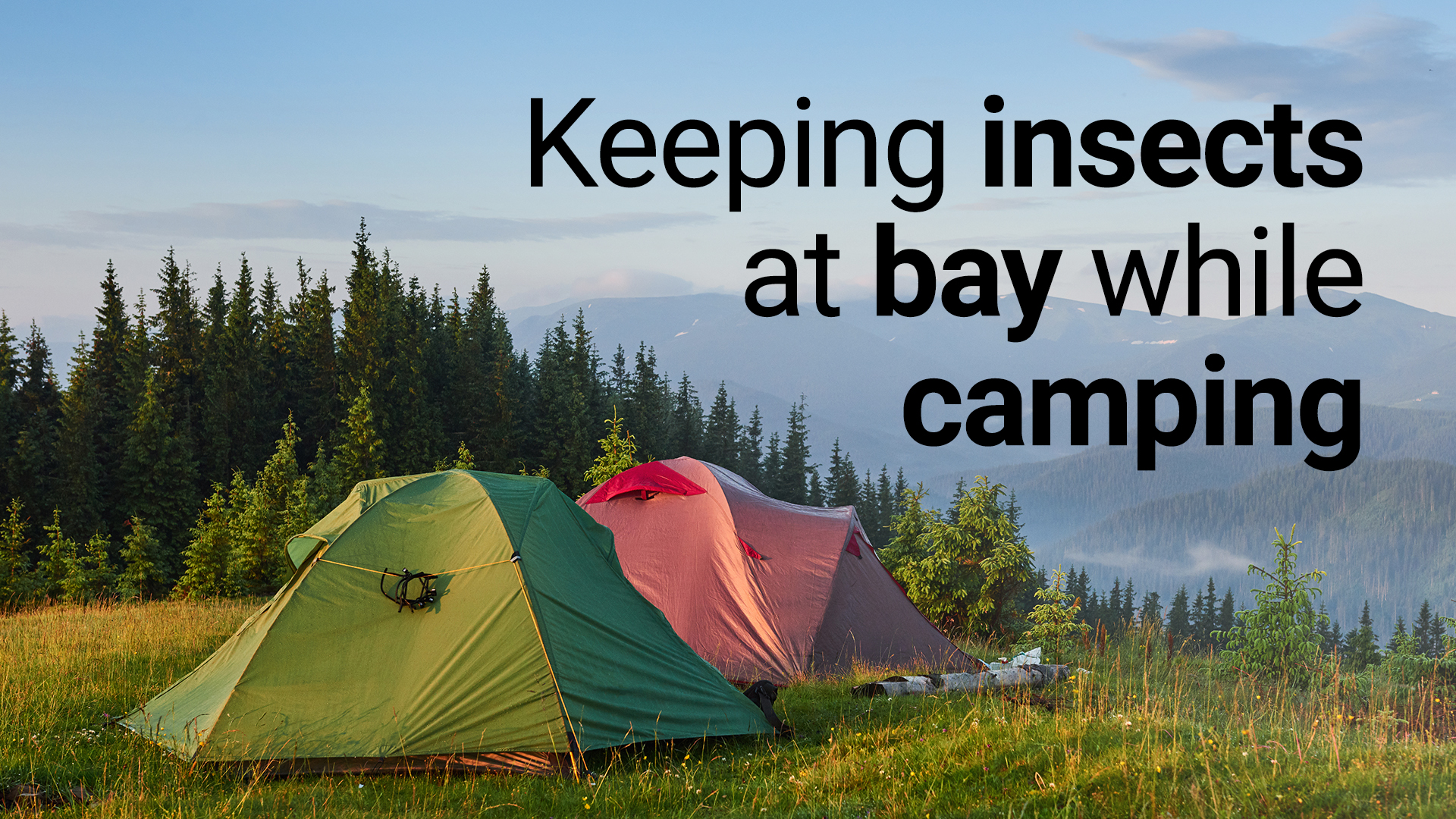 keeping insects at bay while camping