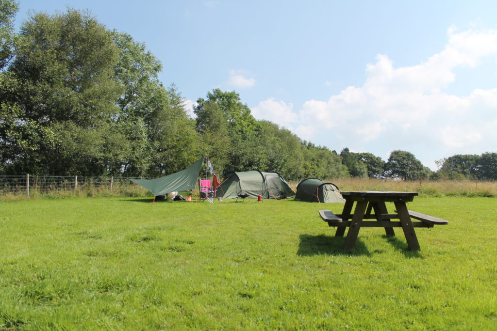 Denmark Farm, Ceredigion​ camp field