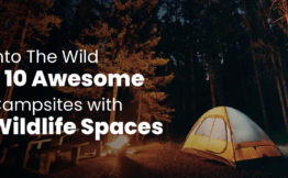 Into The Wild – 10 Awesome Campsites with Wildlife Spaces