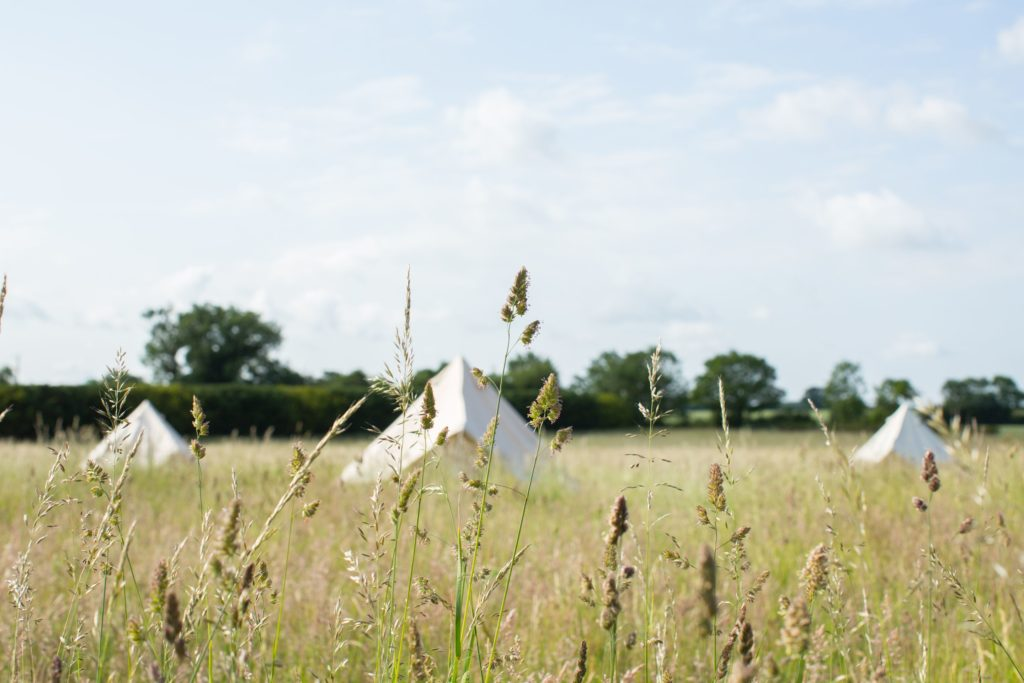 Ling's Meadow, Suffolk camping field