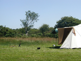 South Penquite Farm tent