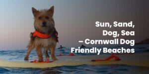 Sun, Sand, Dog, Sea – Cornwall Dog Friendly Beaches