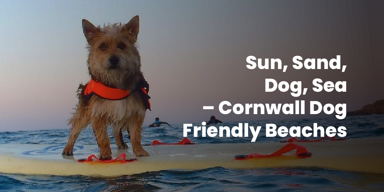 Sun, Sand, Dog, Sea – Cornwall Dog Friendly Beaches