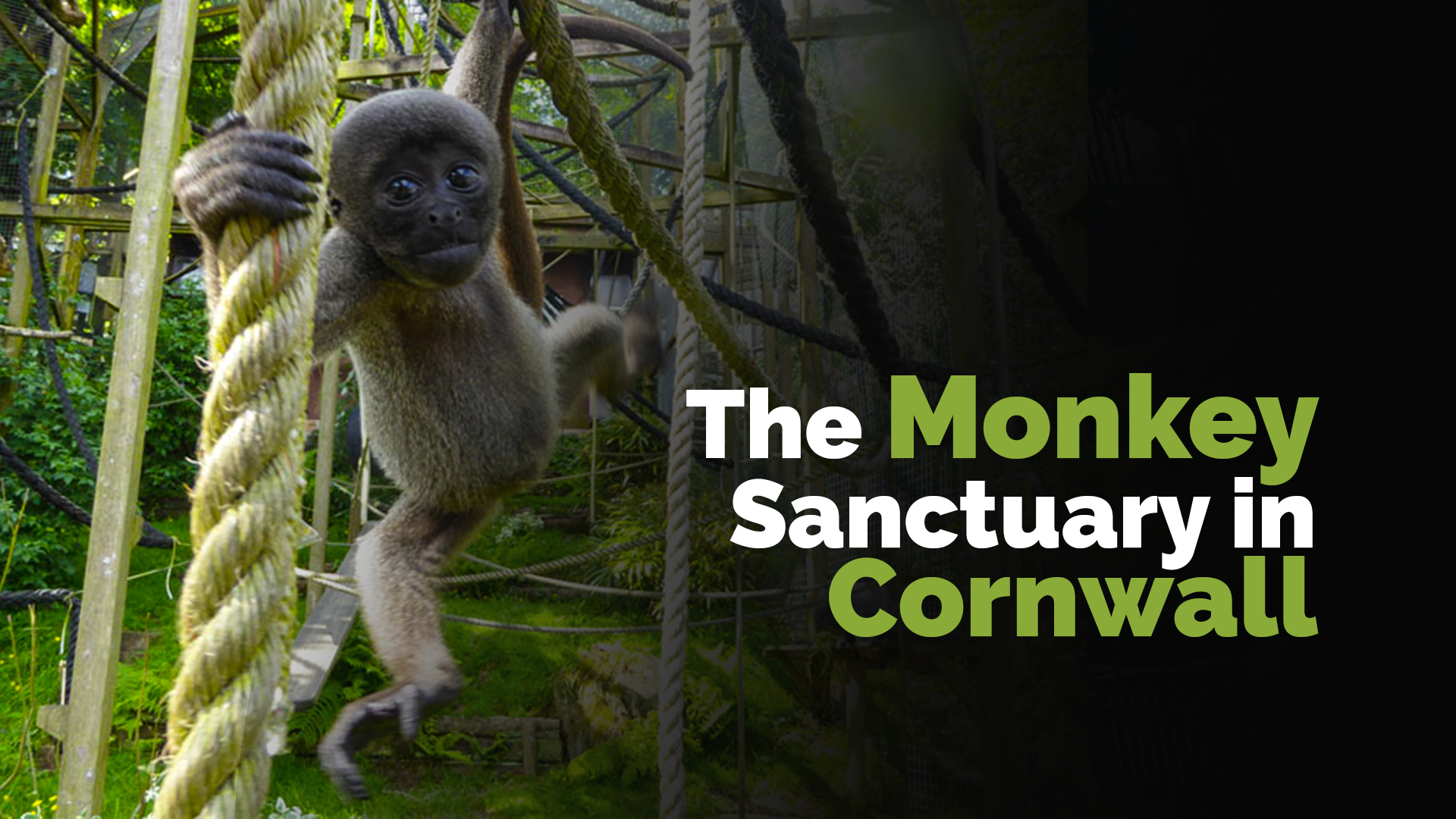 The Monkey Sanctuary in Cornwall